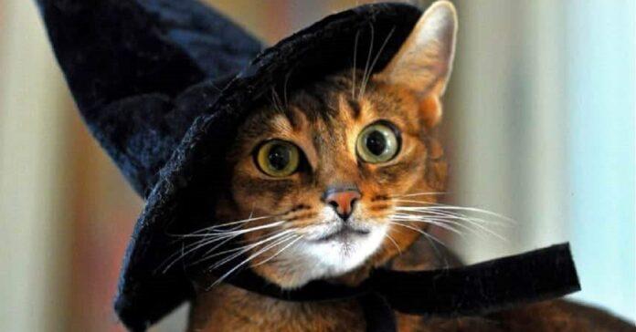 gattino vero mago video ci mostra come scomparire magicamente attraverso divano
