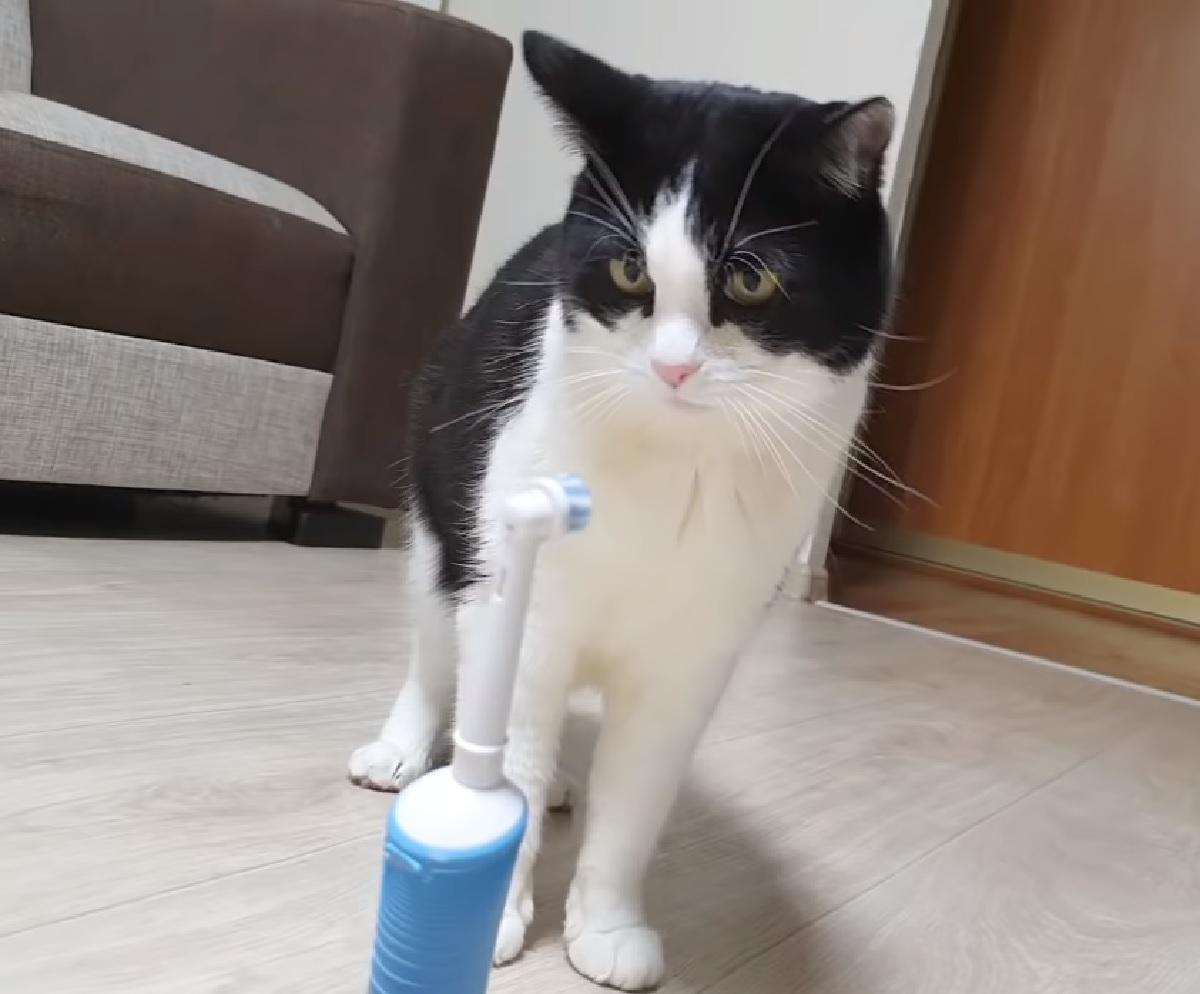 pusic gattino nemico spazzolino