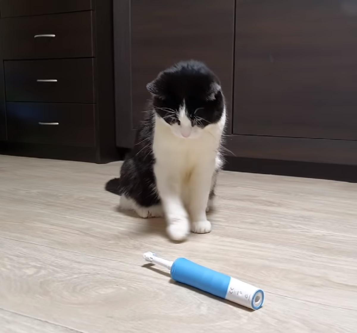 pusic gatto ipnotizzato spazzolino