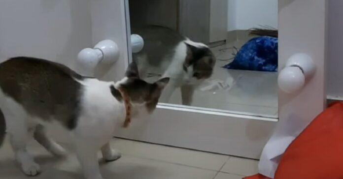 gattino riflesso specchio