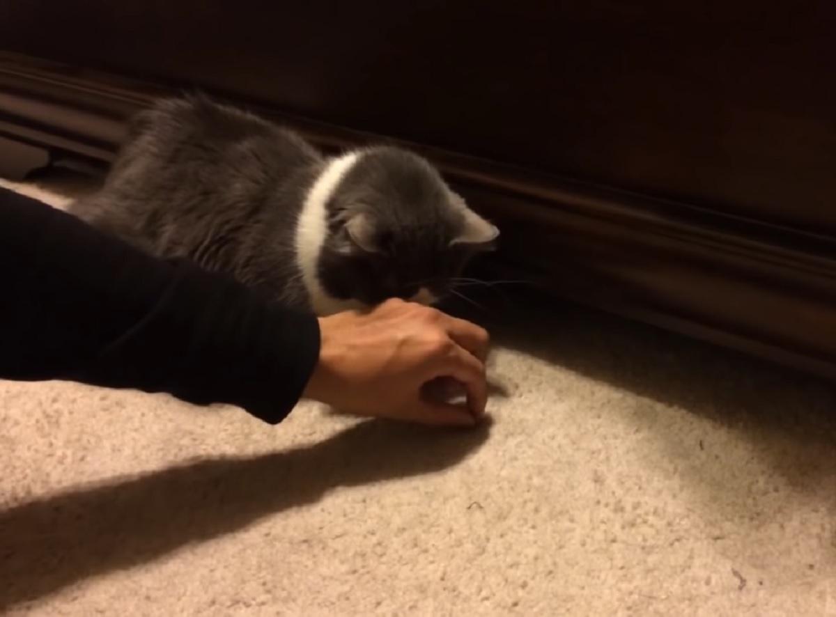 gattino aspetta crocchette proprietario
