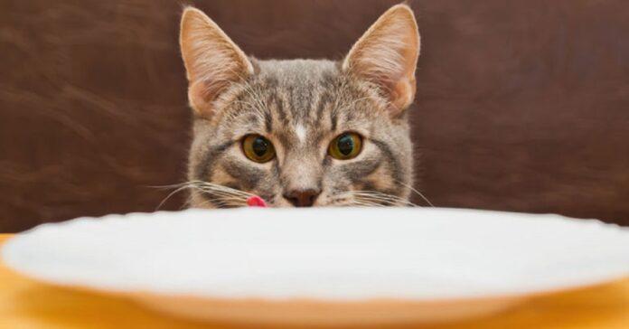 gattino ruba crocchette amico espressione video