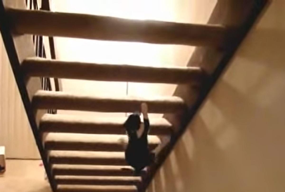 gattino ninja idea strepitosa