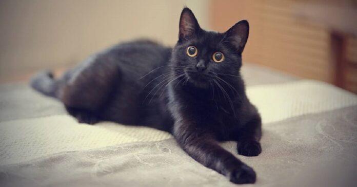 gattino zampe sporche