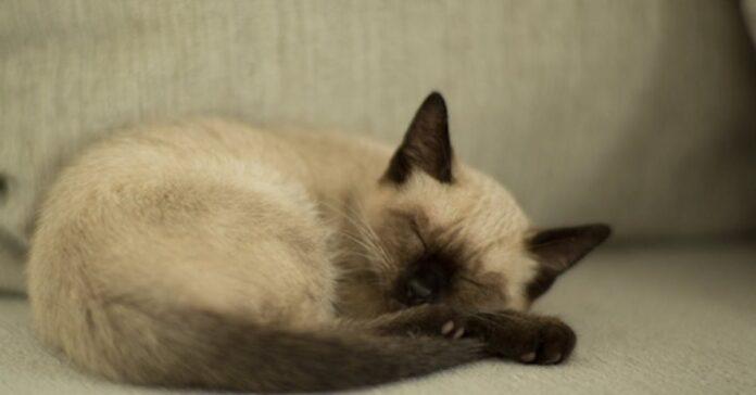 gattino posto dormire