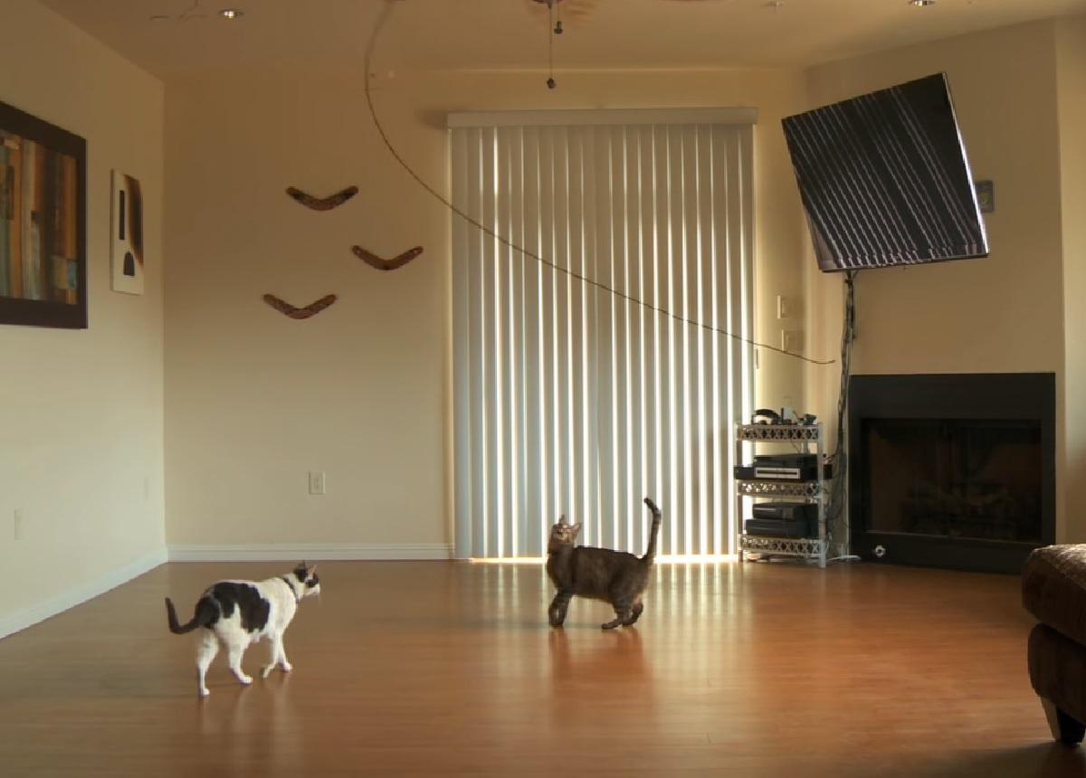 gattini spago volteggia aria