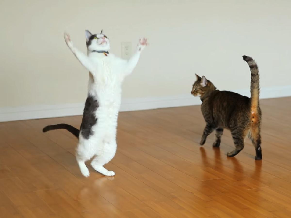 gattino soriano arriva fratellino