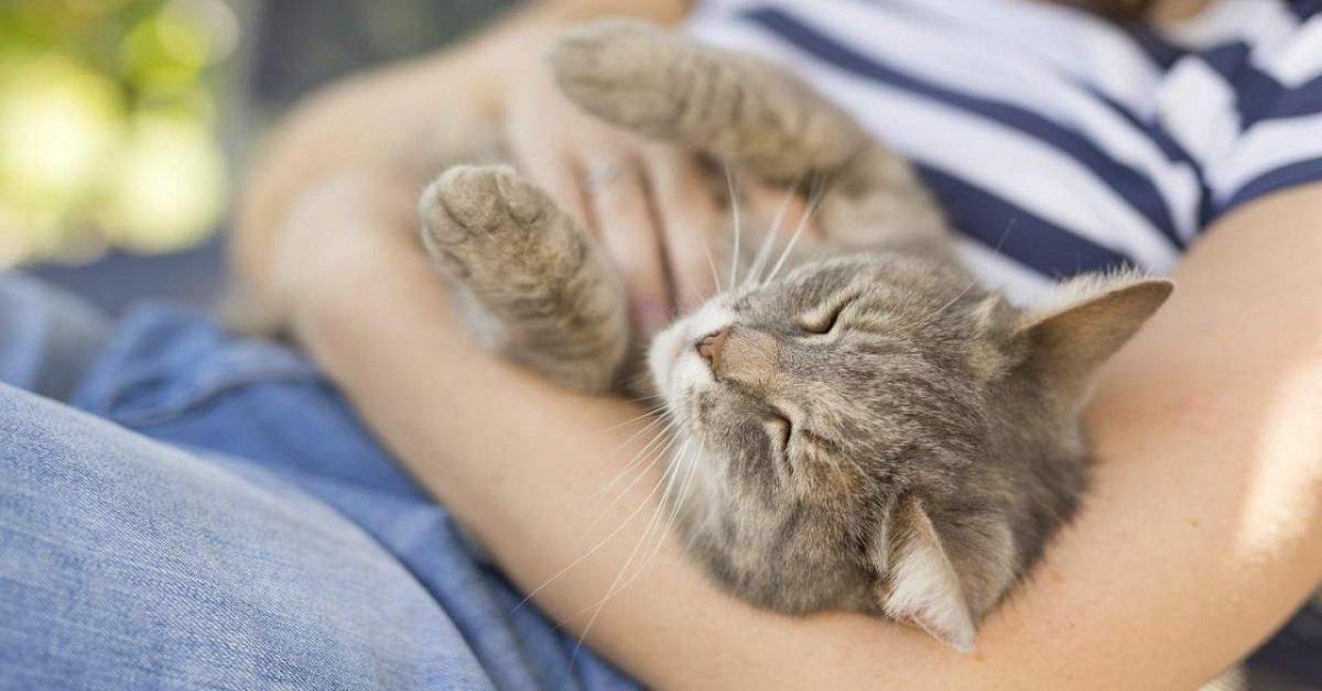 gatto si abbandona alle coccole