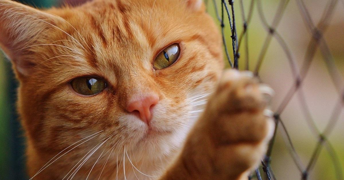 gatto dietro griglia di ferro
