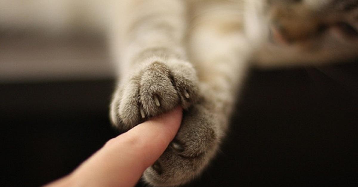 zampe anteriori del gatto