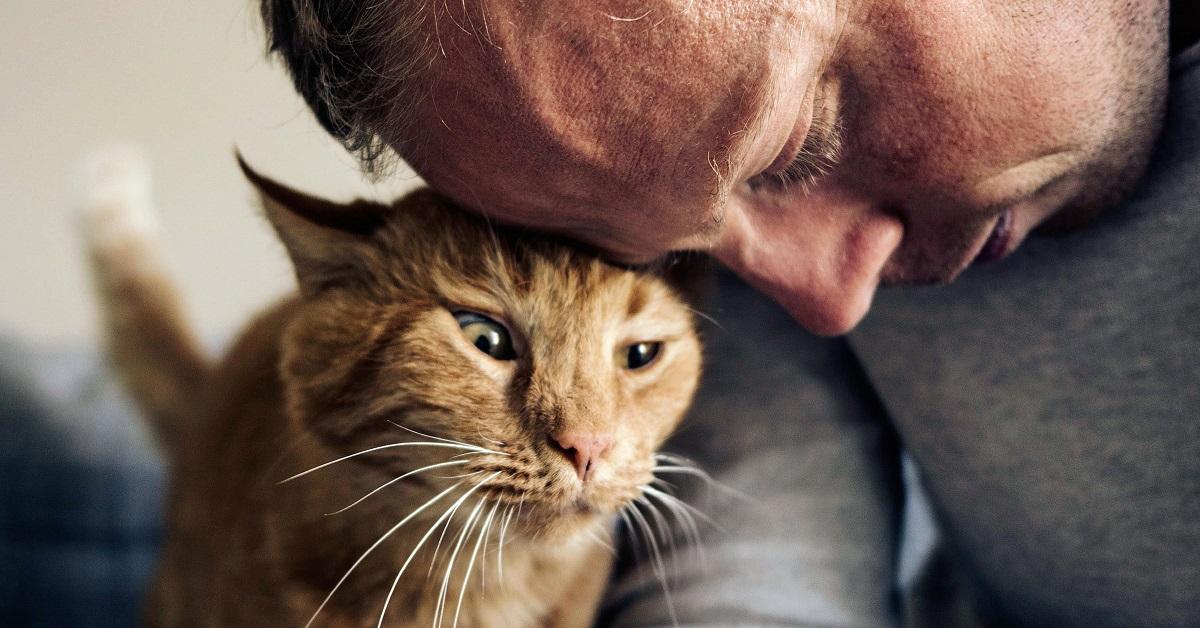gatto e uomo fronte contro fronte