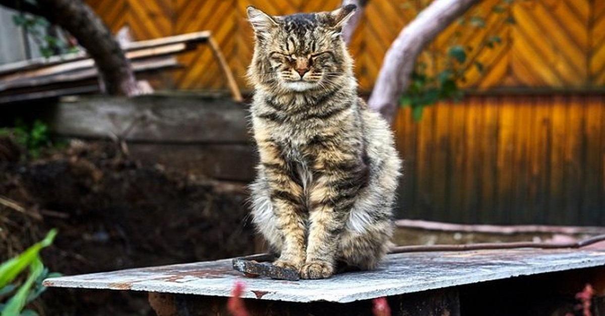 gatto destabilizzato