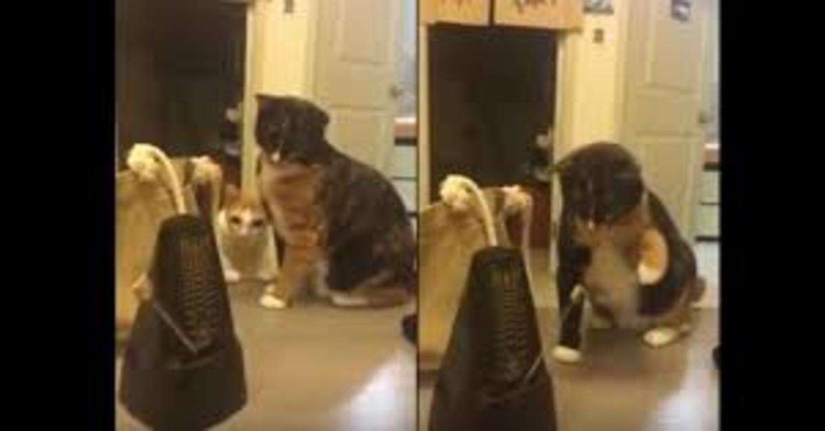 mamma gatta e gattino con metronomo