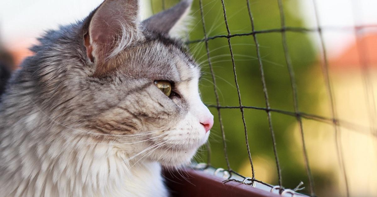 gatto si gode il panorama