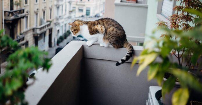 gatto su balcone