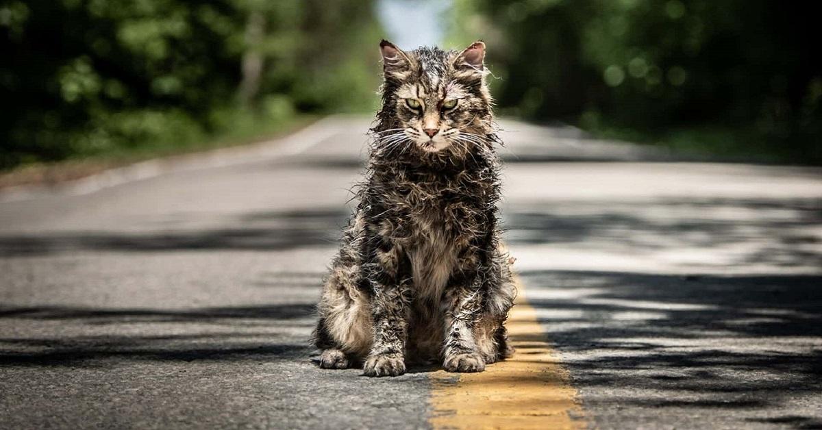 gatto maine coon bagnato fradicio