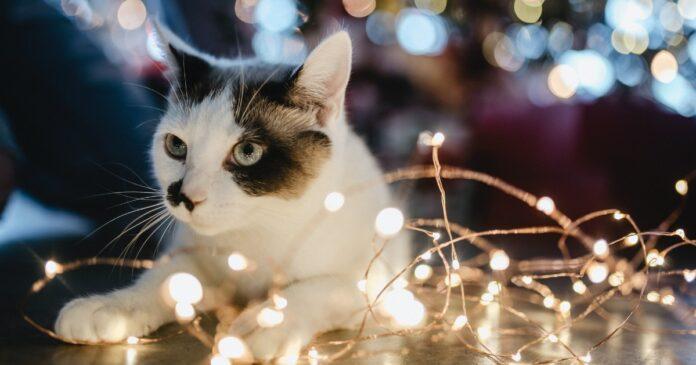 gattini e albero di natale