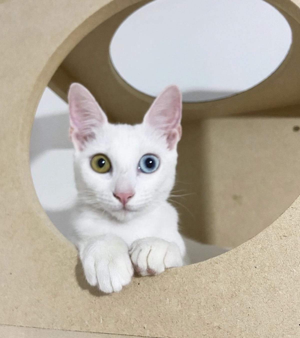 felino occhi colorati