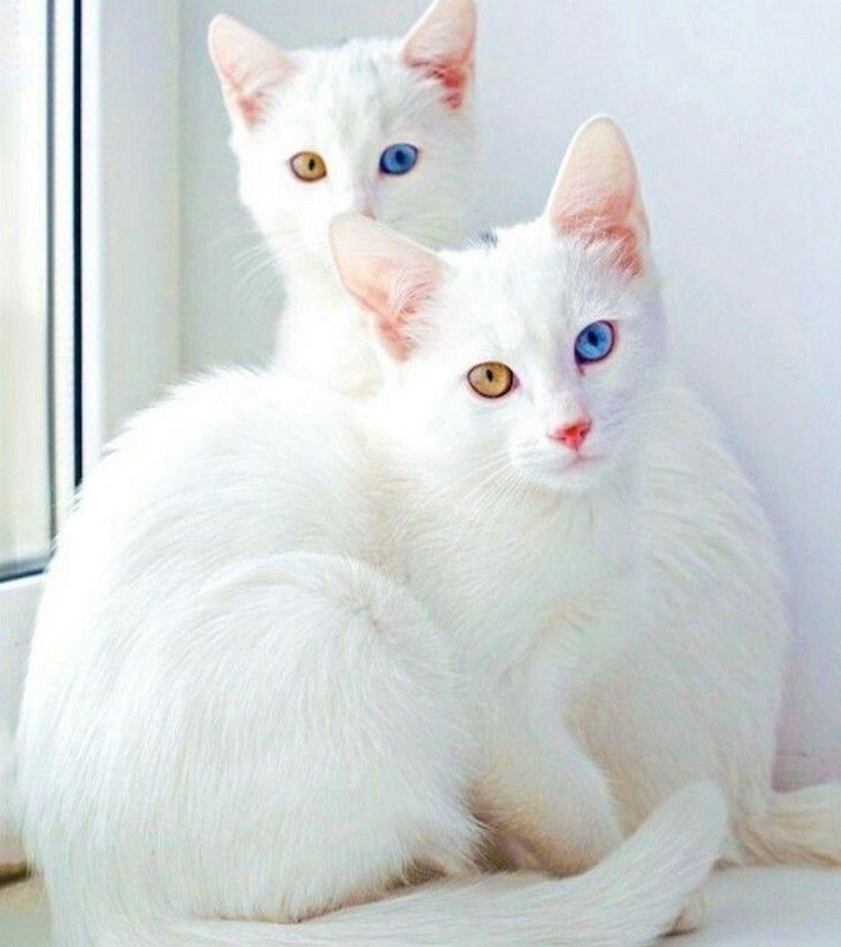 gattini dolci insieme