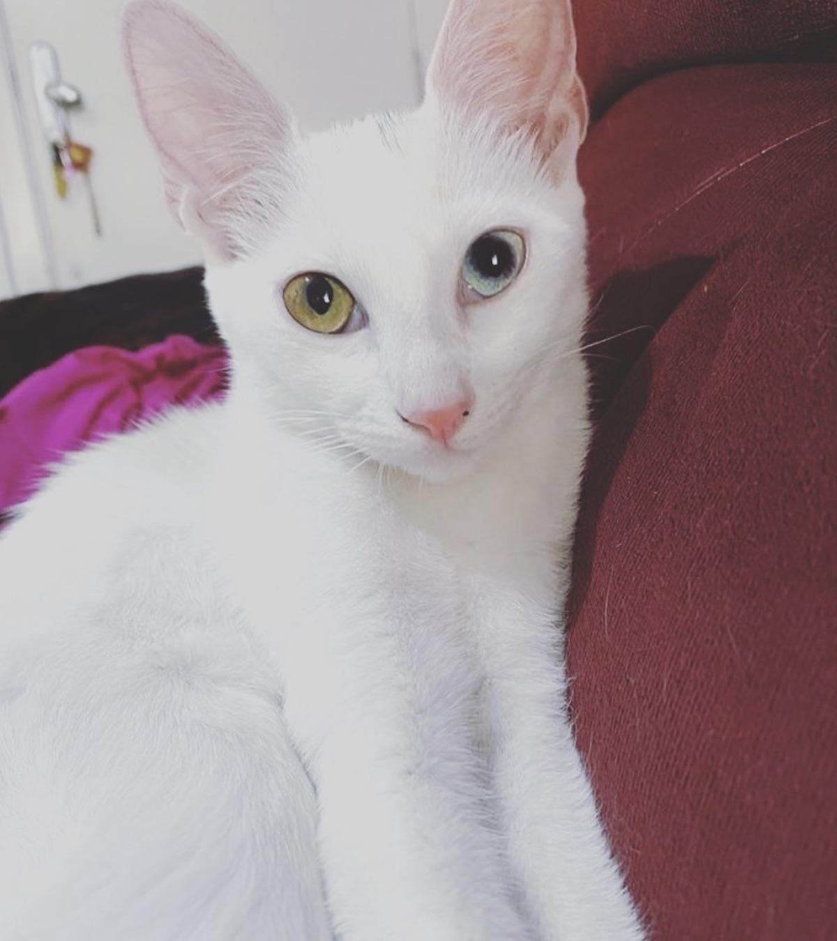gatto occhi profondi