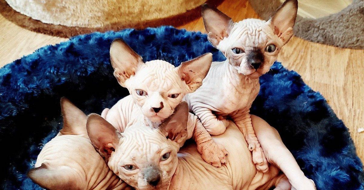 gattini pelle nuda