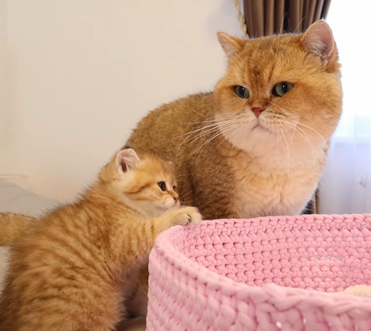 muffin williams rapporto gattini padre