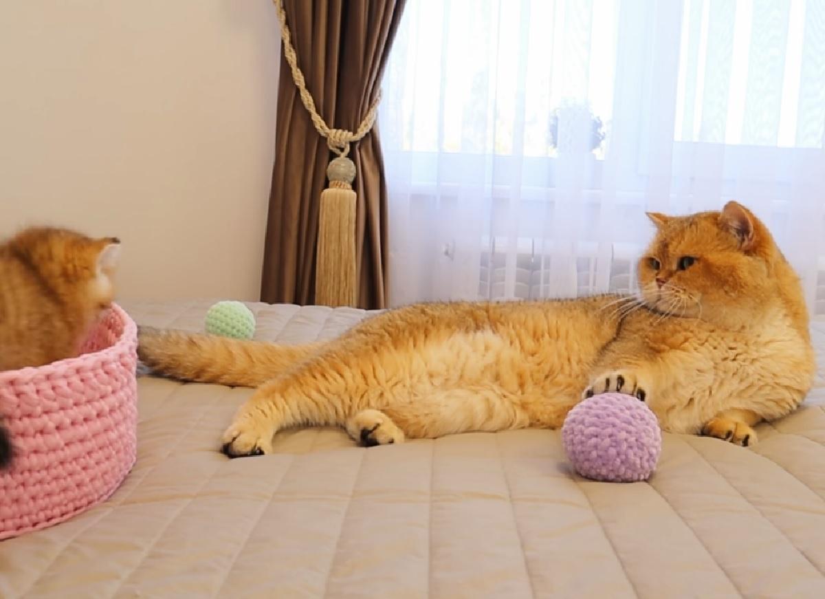 muffin williams gattini ora di gioco