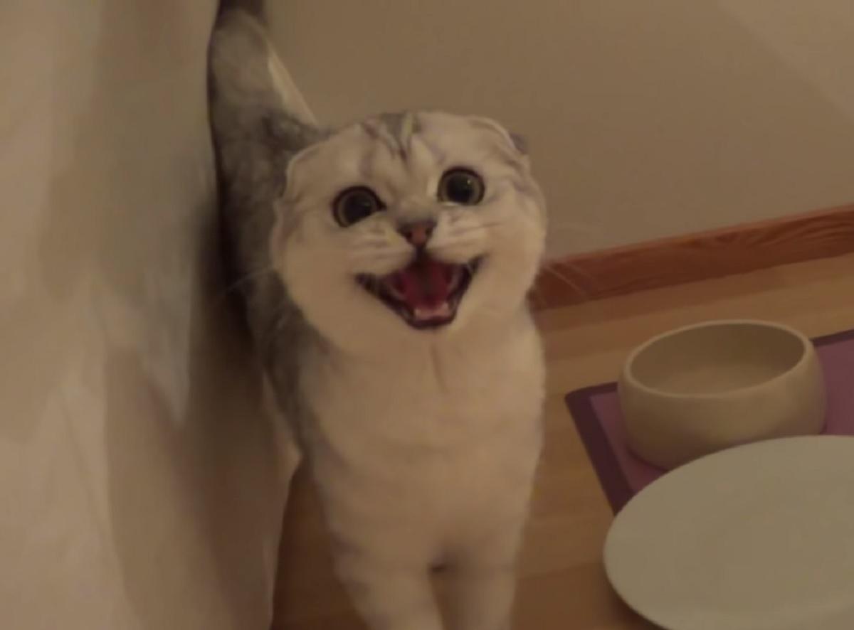 vanilla gattina richieste esigenti