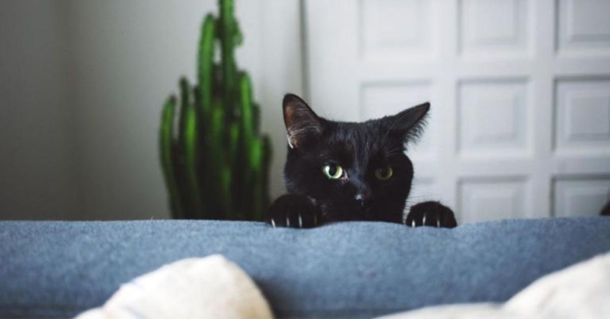 gatto nero graffia divano