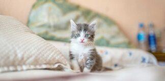 gattino solo sul letto
