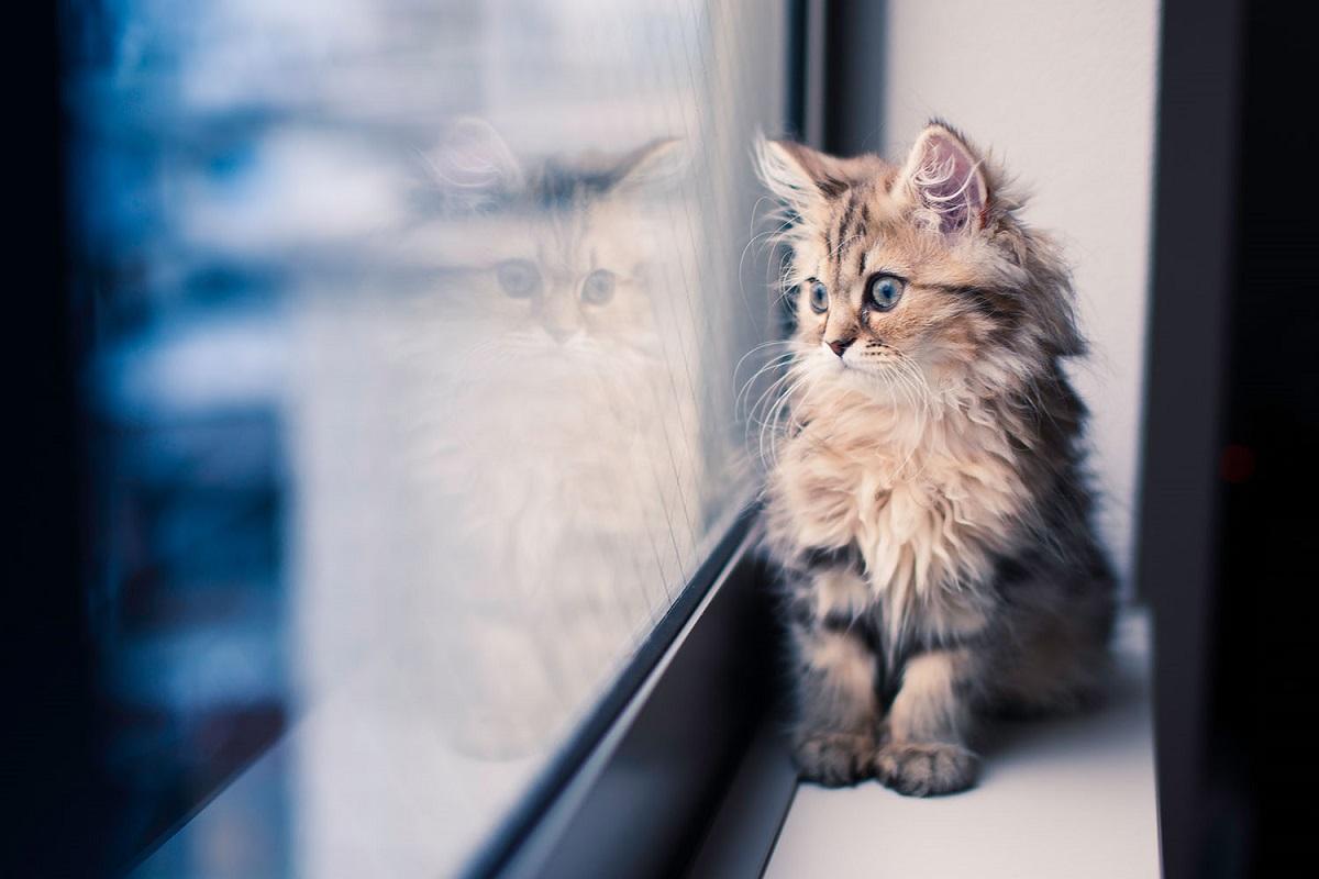 gattino guarda dalla finestra