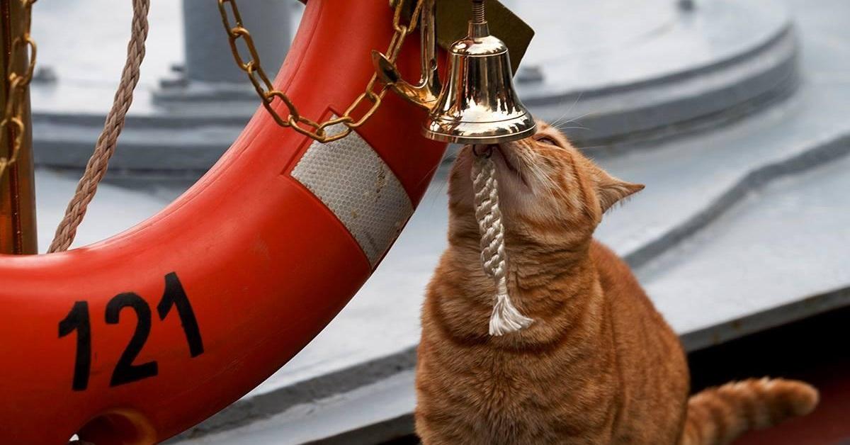 gatto su barca