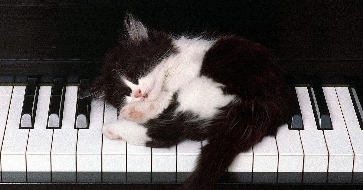 gattino dorme su pianoforte