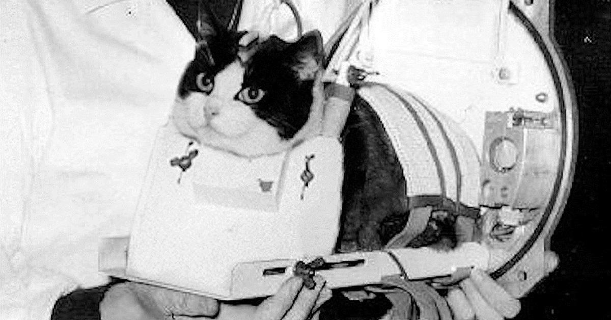 felicette gatta astronauta