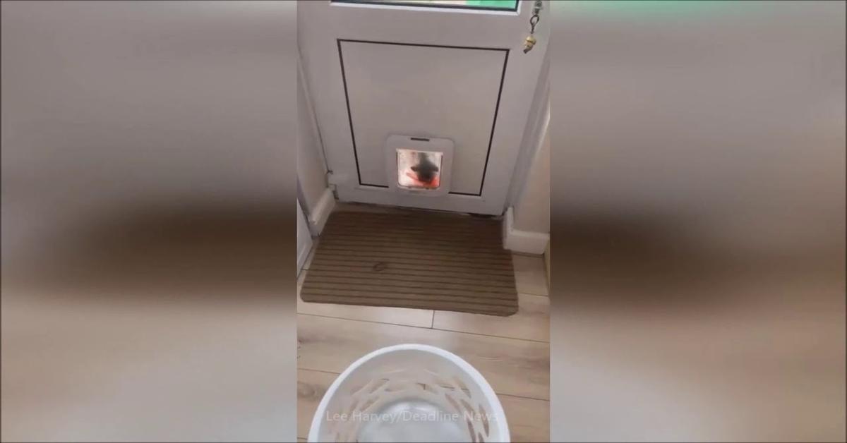 Zico entra in casa con dolci