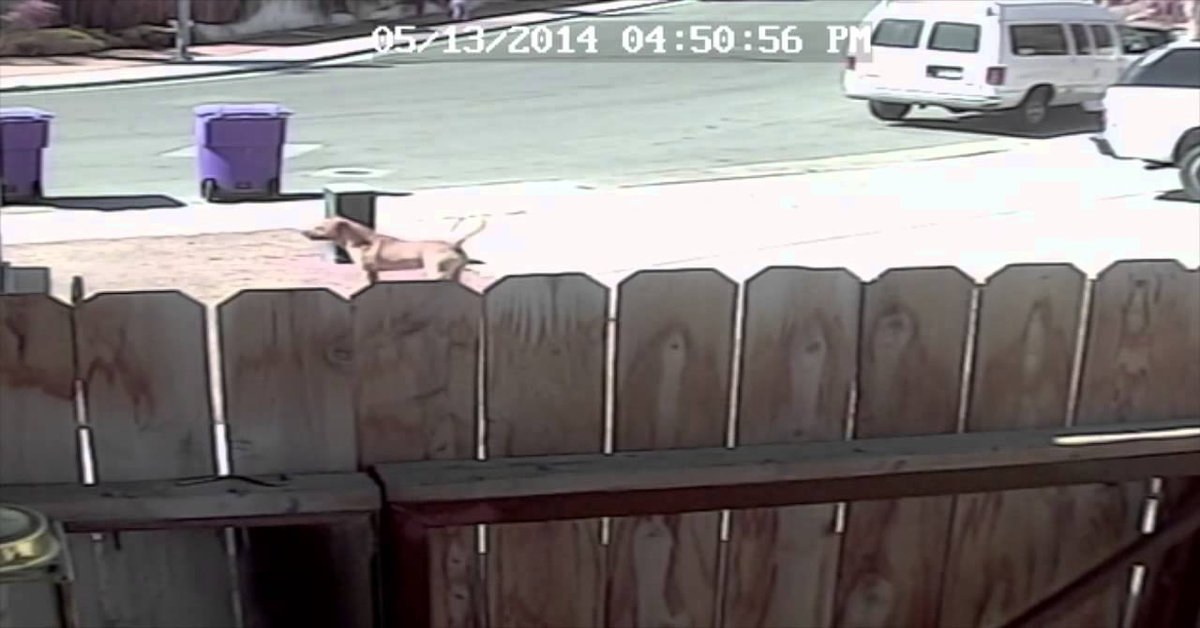 cane arriva improvvisamente per aggredire bambino