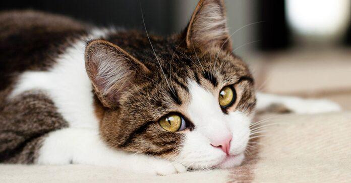gattino con lo sguardo tenero
