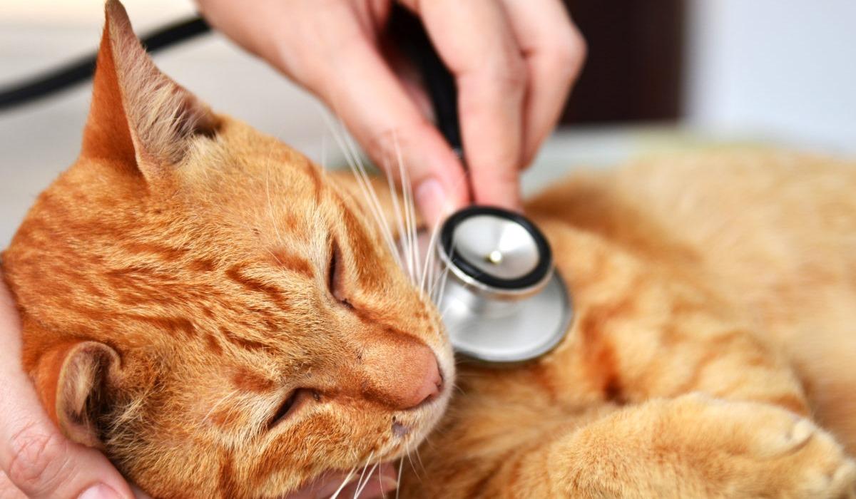 gatto arancione che sta male dal veterinario