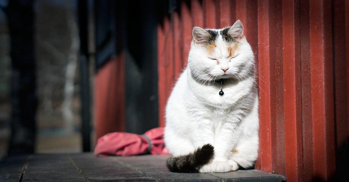 gatto sotto il sole