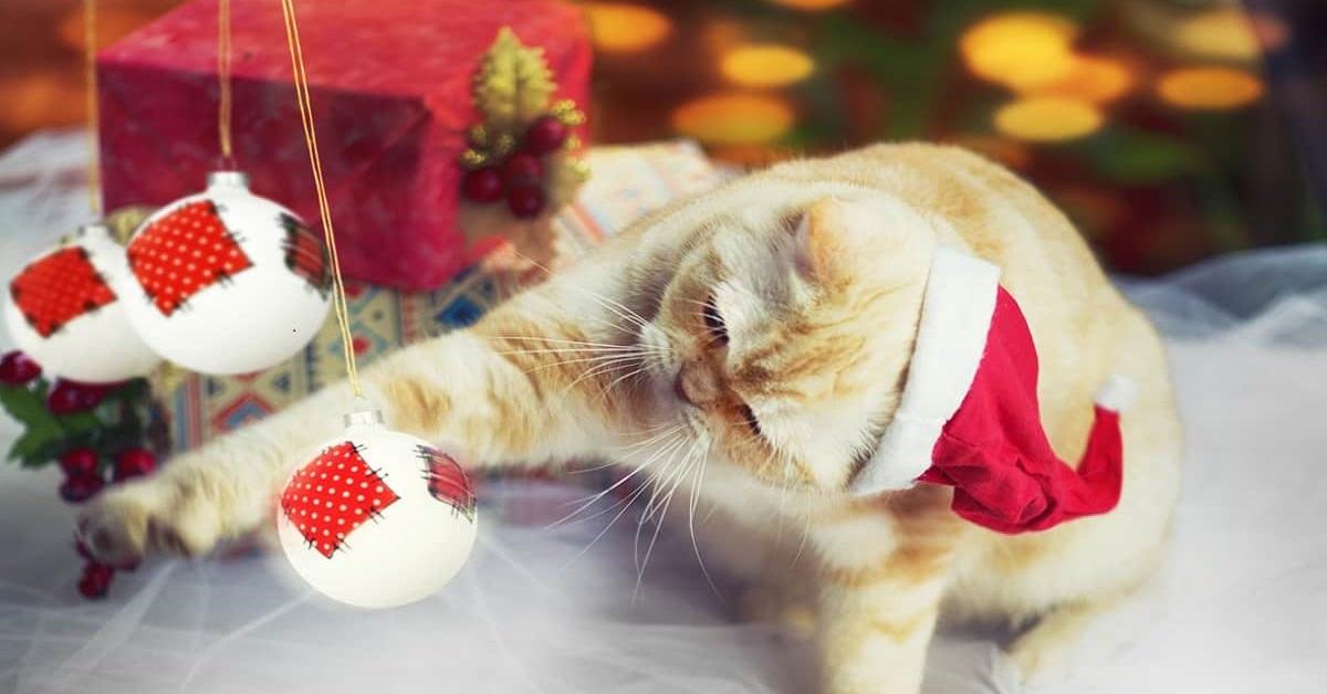 gatto gioca con palline di natale