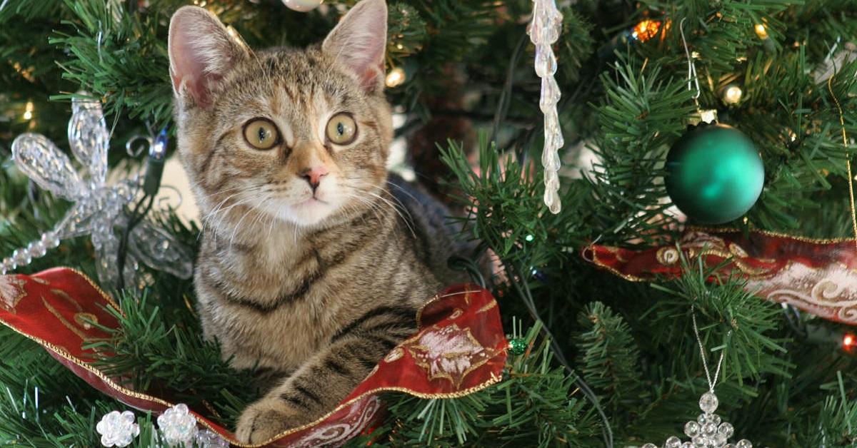 gatto arrampicato su albero di natale