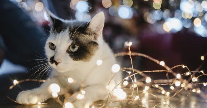 gatto e luci di natale