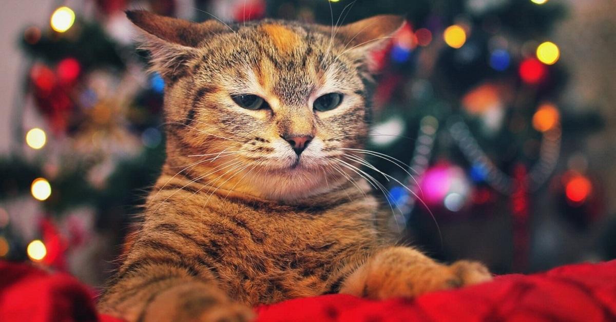 gatto scocciato a natale