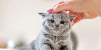 accarezzare un gattino