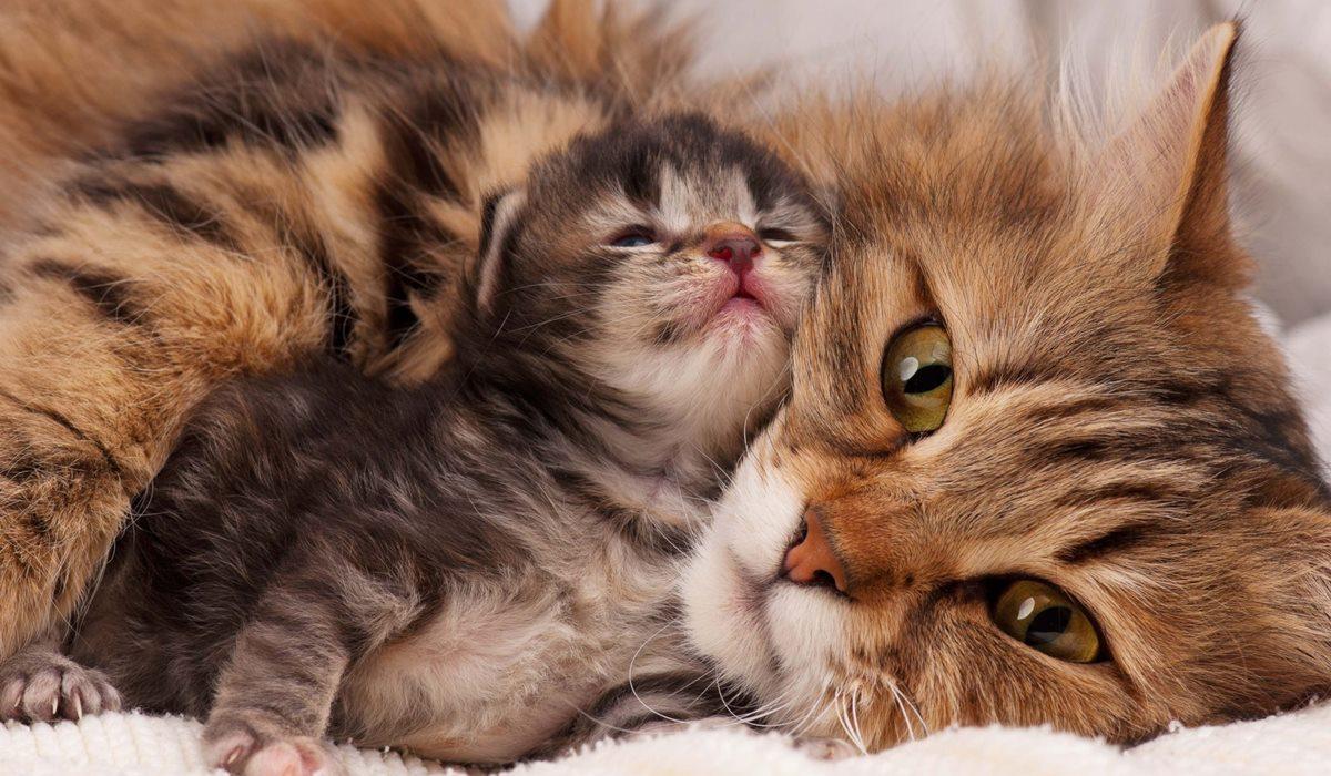 mamma gatta con il gattino