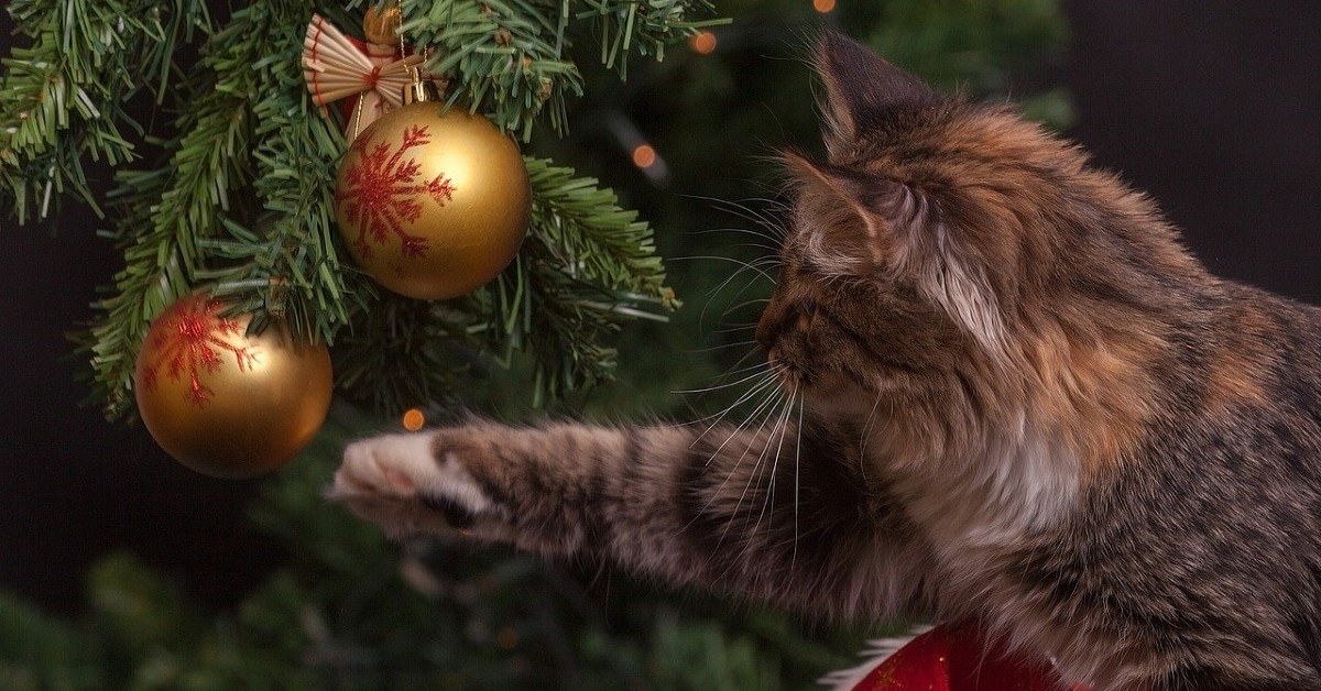 gattini giocano con palle di Natale