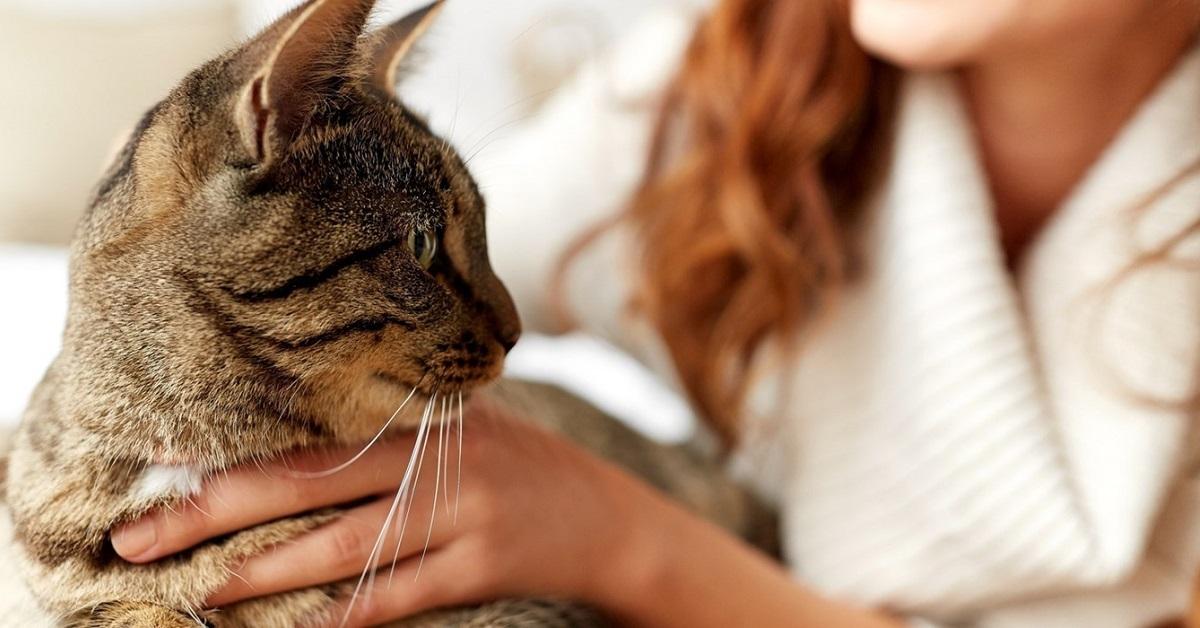 gatto con la padrona