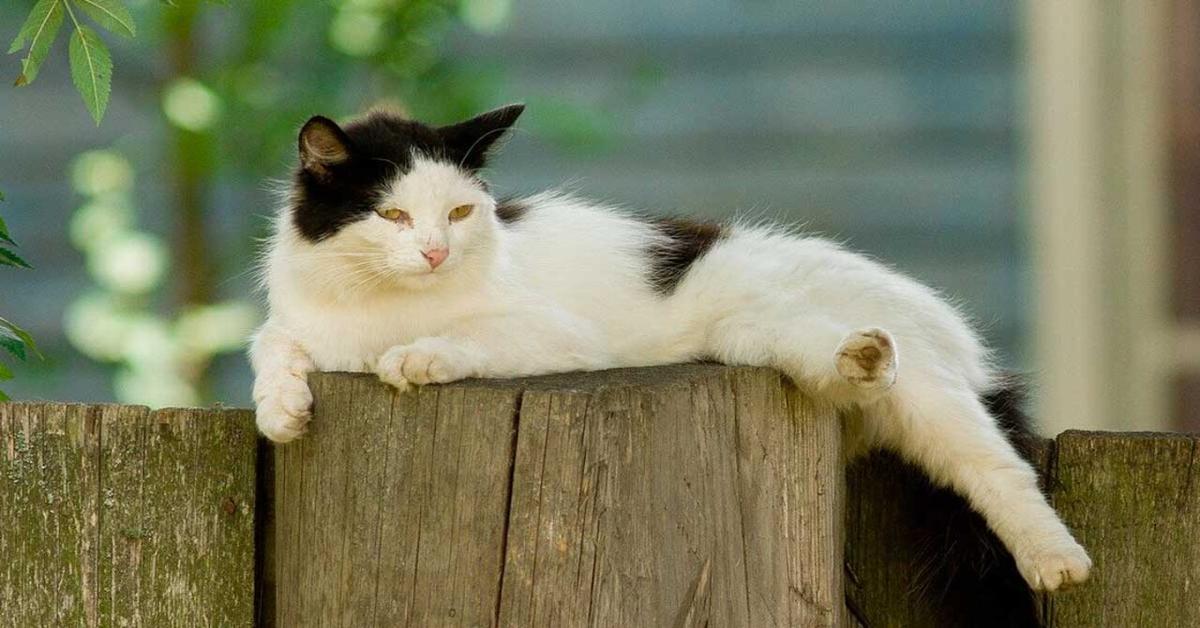 gatto sopra una staccionata