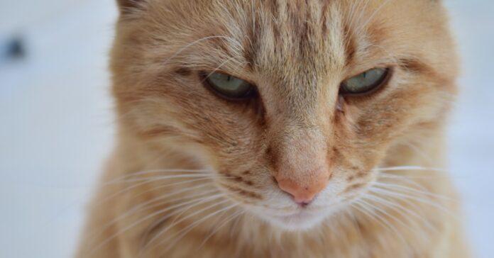 gattino soffia agli ospiti