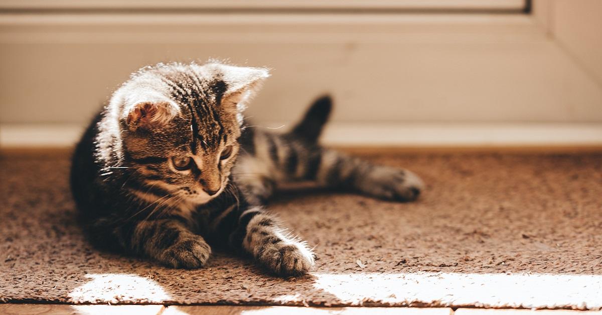 gattino disteso per terra